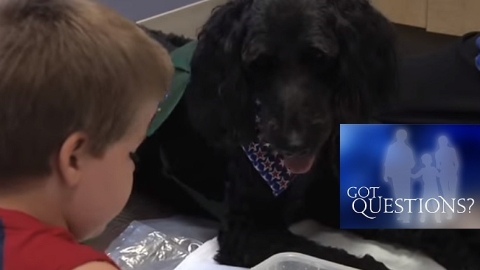 Service Dog Or Therapy Dog Which Is Best For A Child With Autism